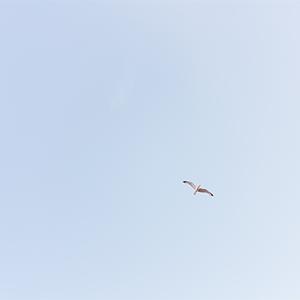 sky_coll